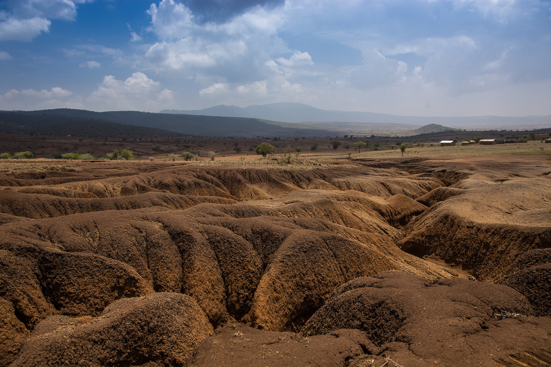 Over the past 10 years, the Tanzanian Maasai landscape has witnessed a dramatic increase in soil erosion with almost total destruction of the soil resource in many areas used for grazing of livestock