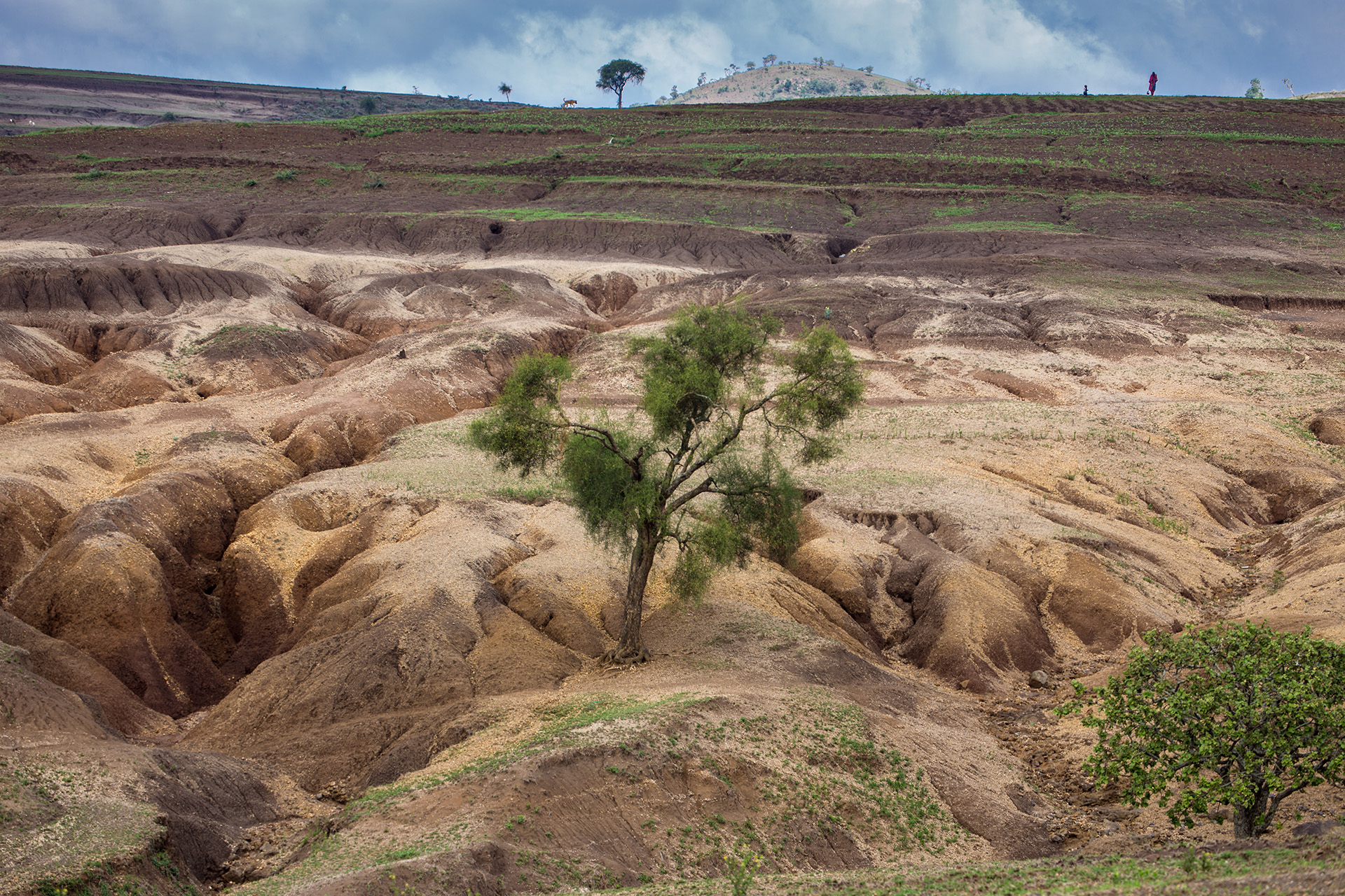 "Conservation agriculture is not without its own issues. Here, collapse of historic terraces from the colonial period has contributed to ""badland"" formation."