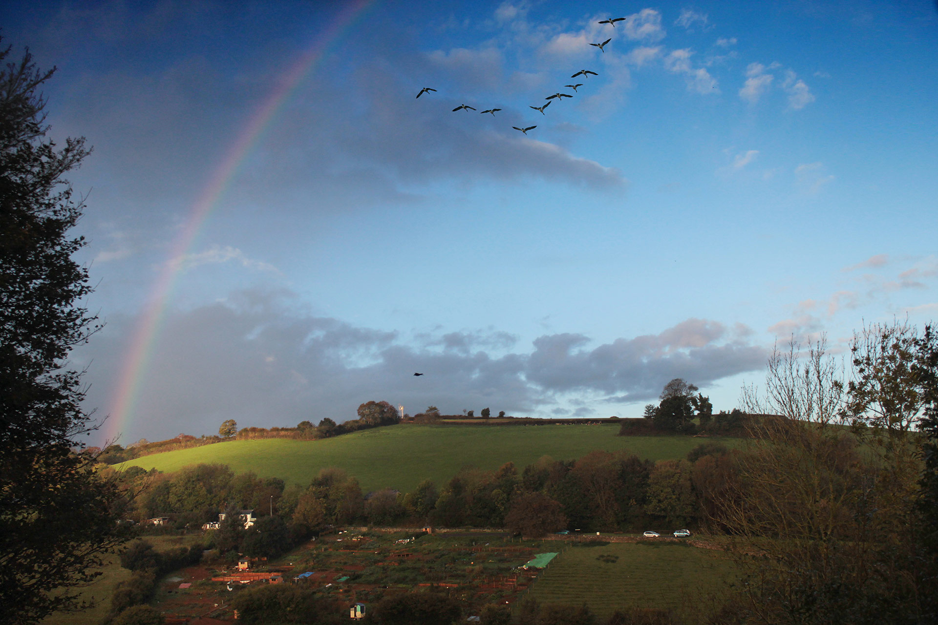 Geese migrating at the end of summer, and a rainbow sends them upon their way.