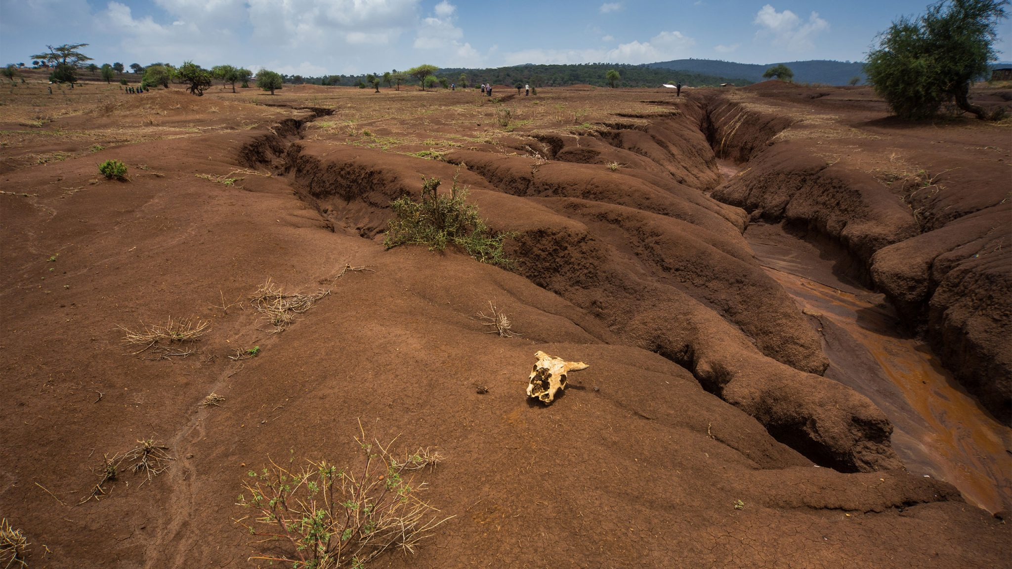 Landi Kenya in Tanzania. The global threats of climate change and population growth are key catalysts of the soil erosion challenge that is pushing these East African landscapes towards a tipping point. Here, we see deep gullies cutting into the landscape and literally cutting a village into two parts