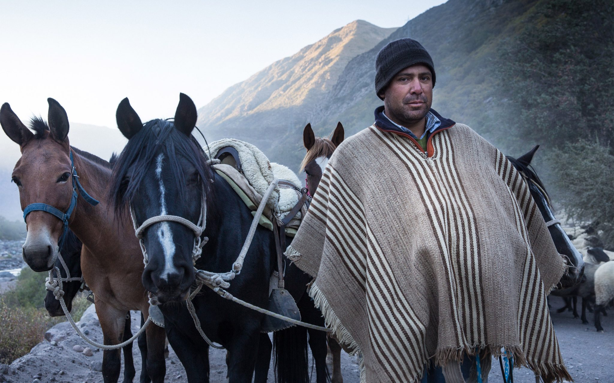 Portrait of 'Huaso Chileno' Chilean Cowboy, Andes Mountains. Shepherding a flock of 1500 sheep. Carey Marks Photography