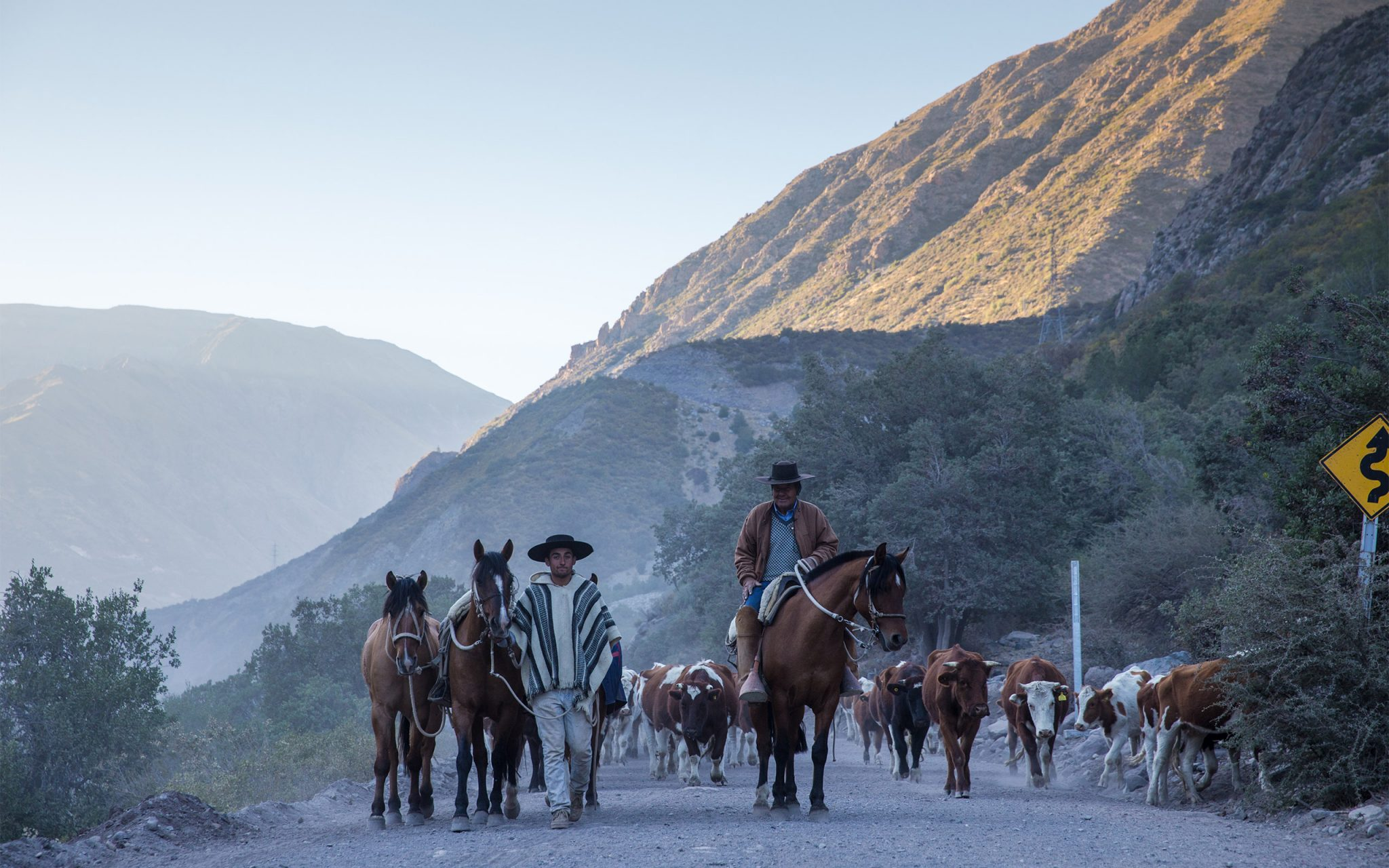 'Huaso Chileno' - Chilean Cowboys in The Andes Mountains. Shepherds taking cattle to market in Chile. Carey Marks Photography