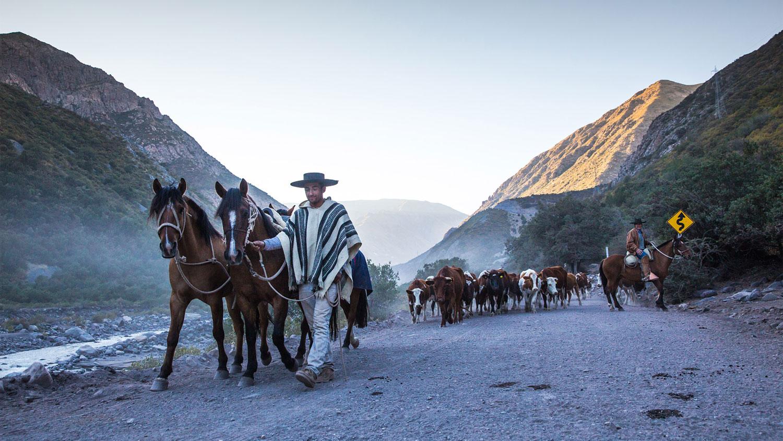 Huaso Chileno 'Chilean Cowboys