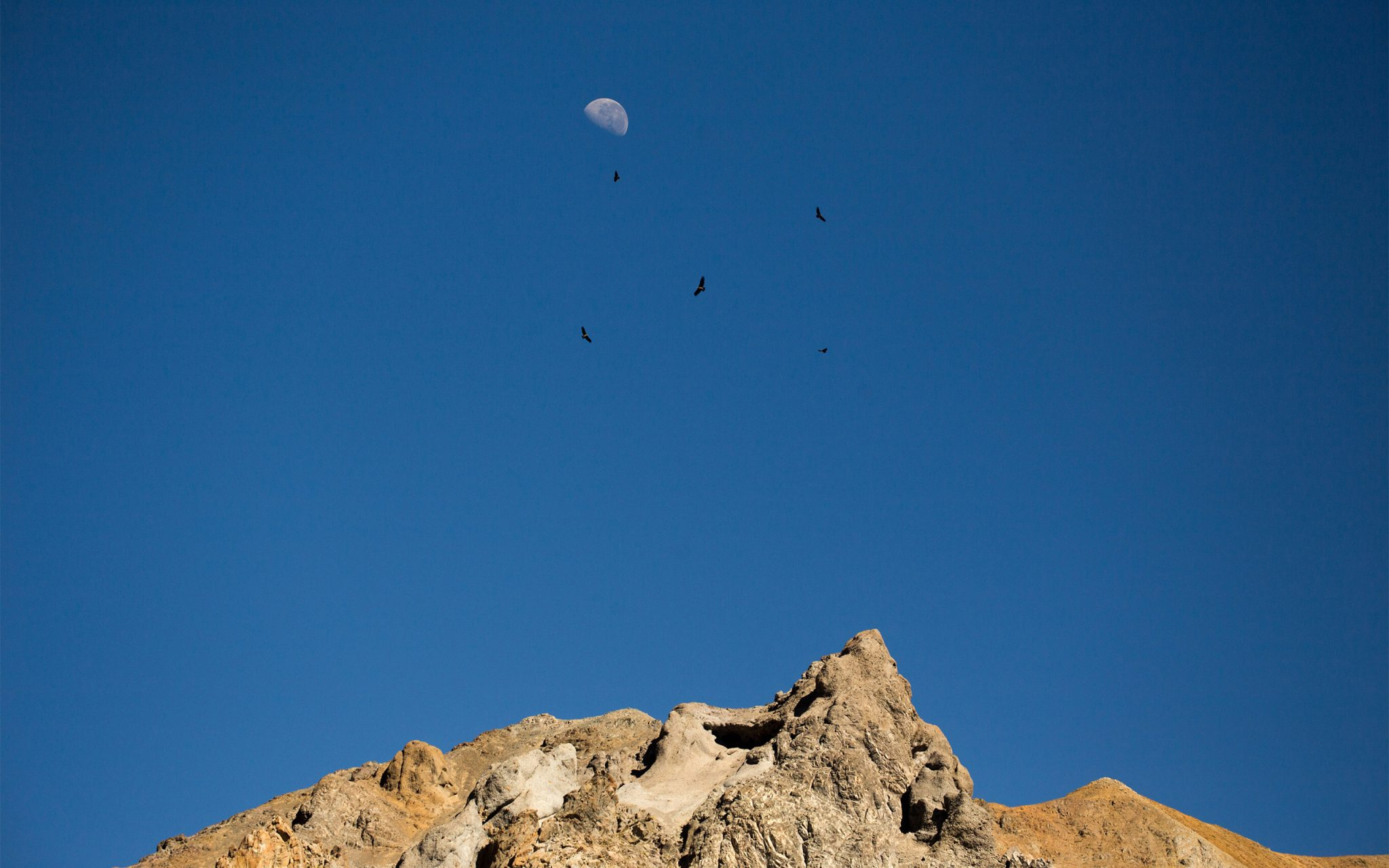 """La luna y los condores""The moon and condors fly high at 4800 metres above the Palacios Glacier in the High Andes in Chile. Carey Marks Photography"