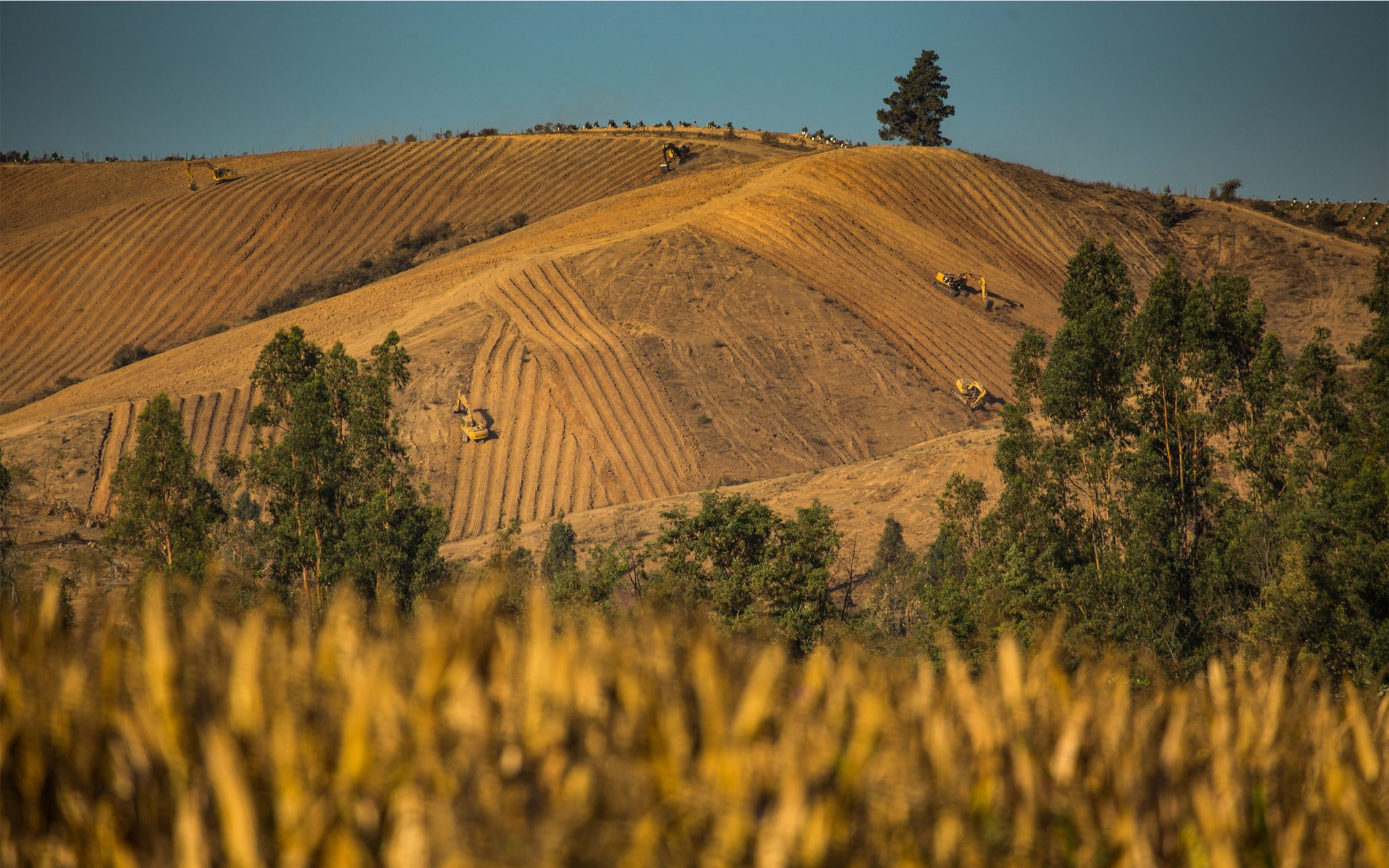 Agricultural machinery clearing slopes leaves the land vulnerable to soil erosion. Rancagua Basin, Chile. Carey Marks Photography