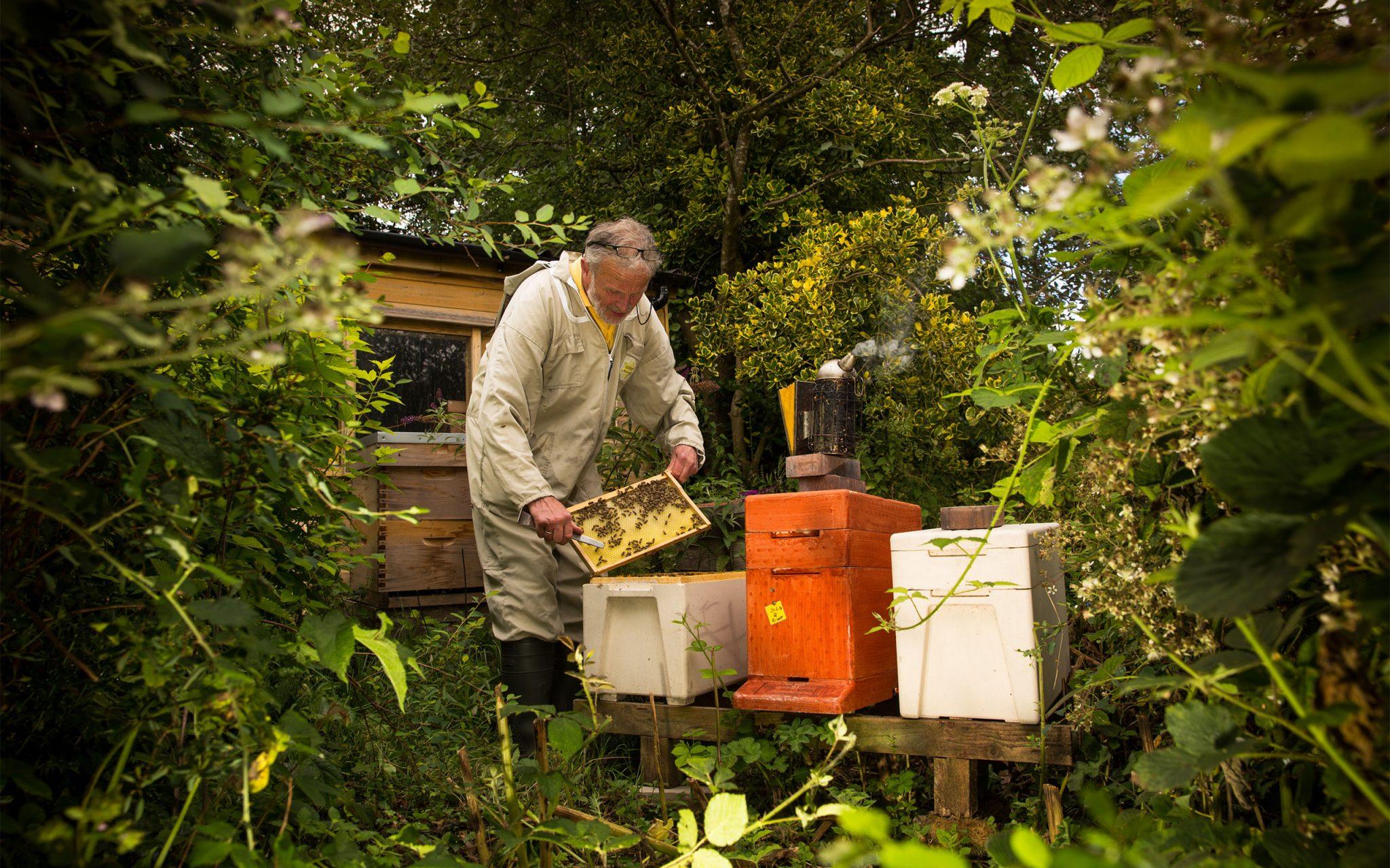 Peter Hunt, Beekeeper in his apiary at Blackaller-Bees, Dartmoor Wild Flower Honey