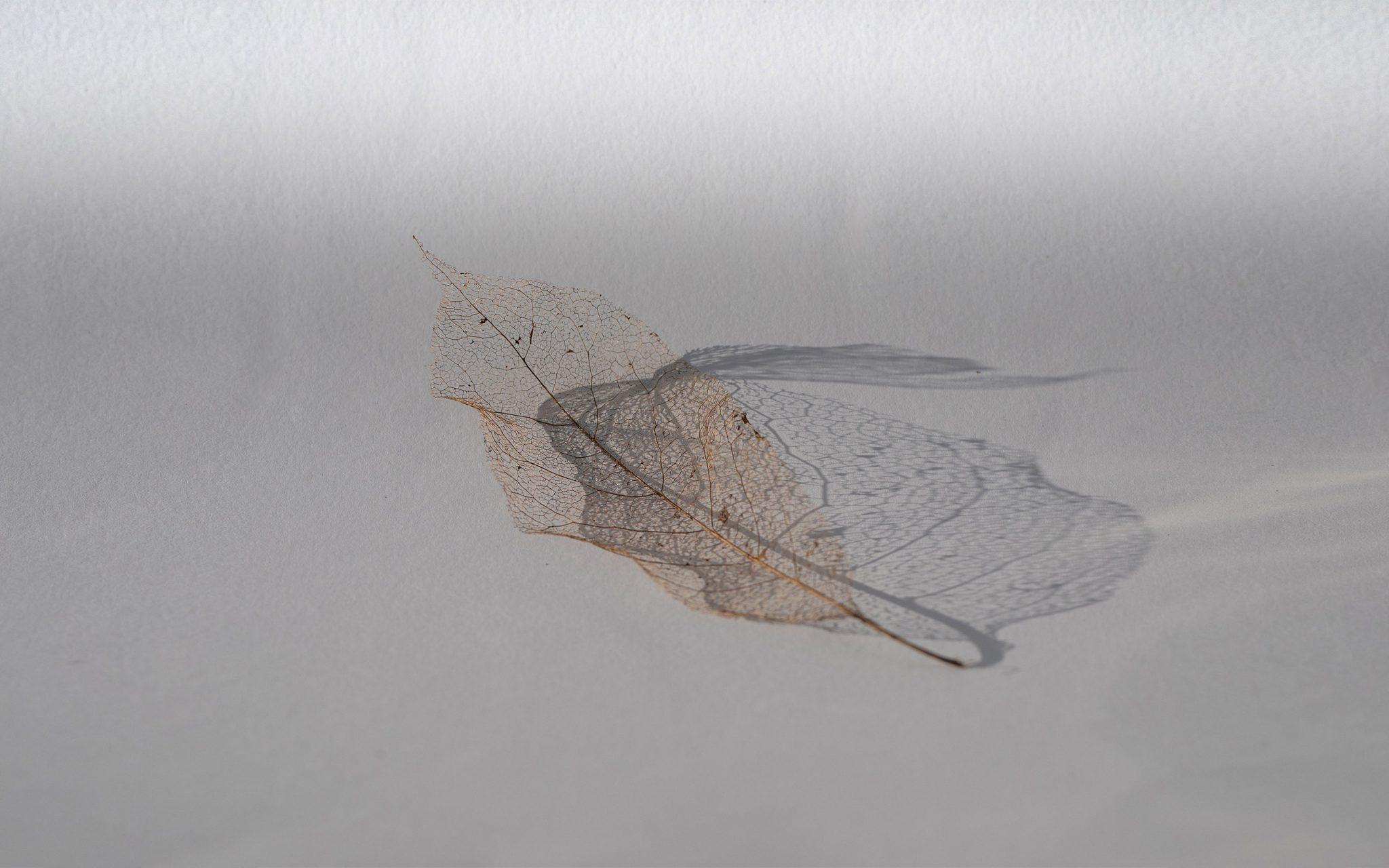 DeadFlowers-Leaves_StillLife